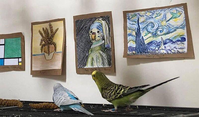 Женщина создала художественную галерею для волнистых попугаев