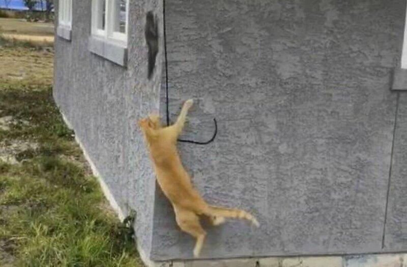 Кот пустился в погоню за белкой