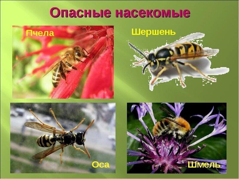 Жужжащие, жгущие, жалящие: какую опасность несут насекомые с жалом?