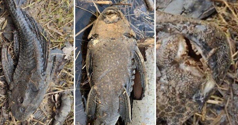 Странное существо на берегу пруда смутило питерских рыбаков