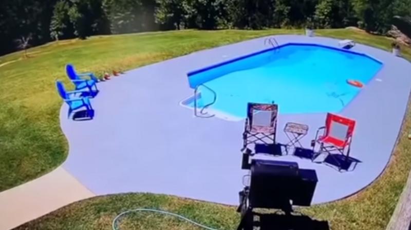 Пытавшаяся скрыться от собак корова запрыгнула в бассейн американца