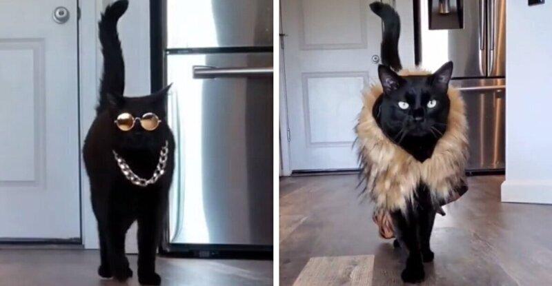 Как развлечься на карантине с помощью кота