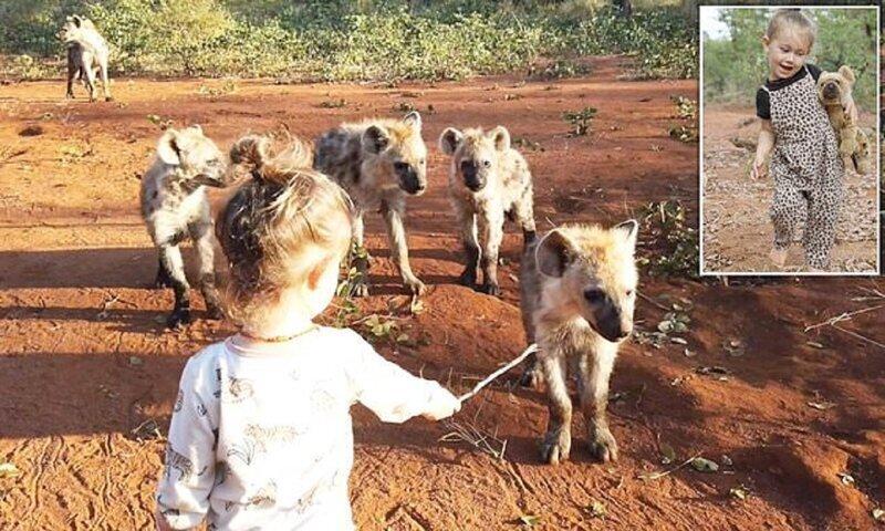 Двухлетняя девочка подружилась с семейством диких гиен