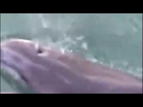 Из Черного моря в Дон приплыли дельфины