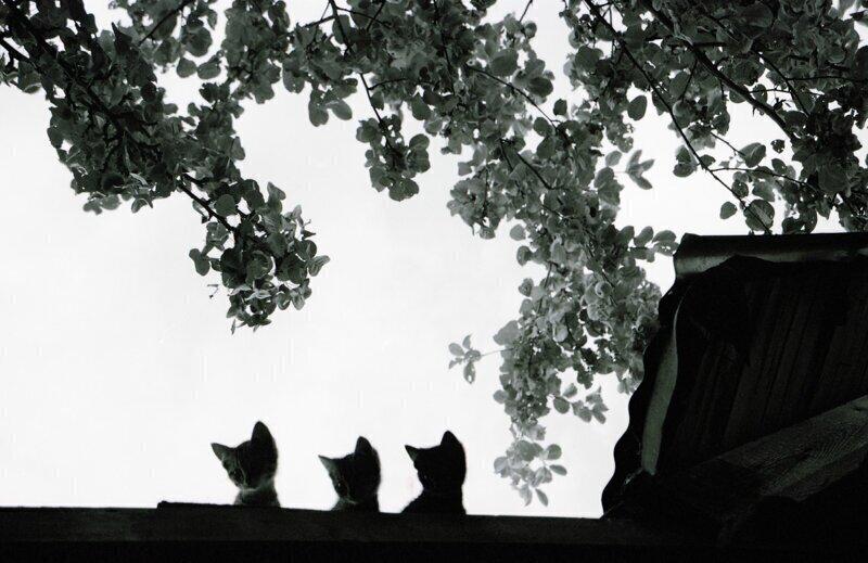 Весна пришла, коты прилетели!