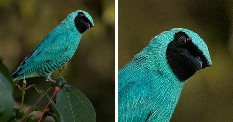 Невероятные птицы Перу