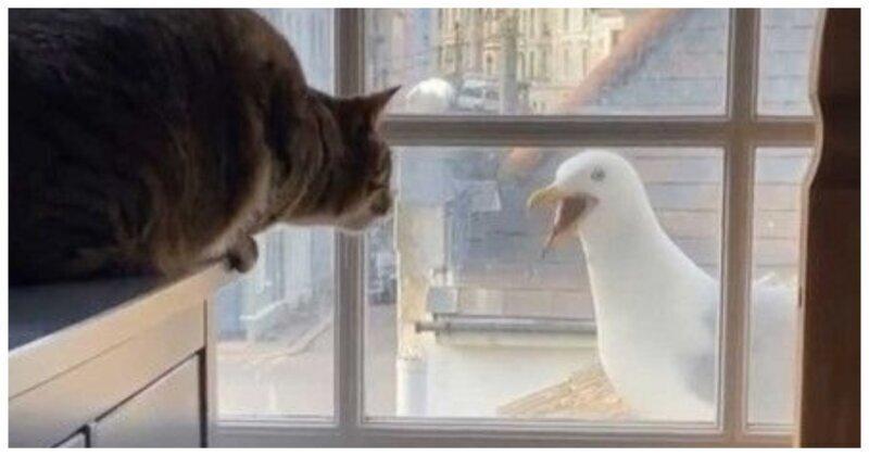 Кошка поговорила с чайкой через окно