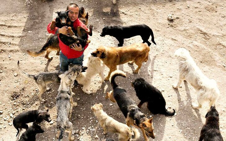 Китайский миллионер разорился из-за собак