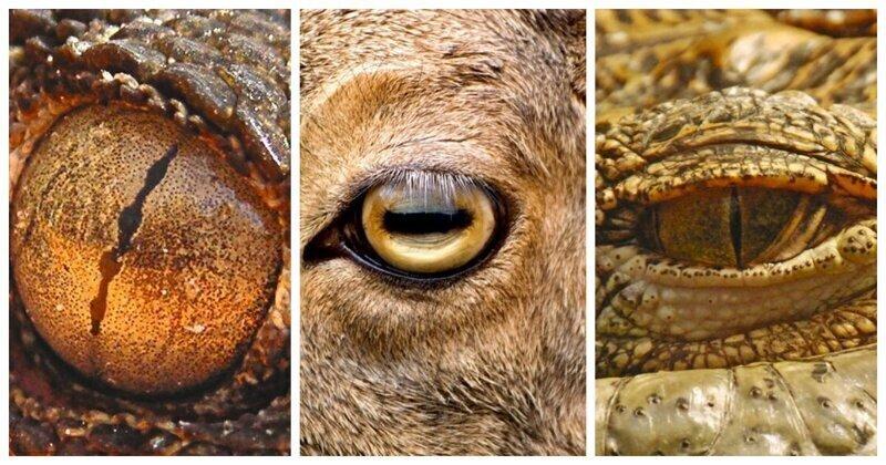 7 типов зрачков у животных: какими удивительными способностями они наделяют своих хозяев?