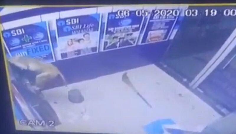 В Индии дикая обезьяна вскрыла банкомат