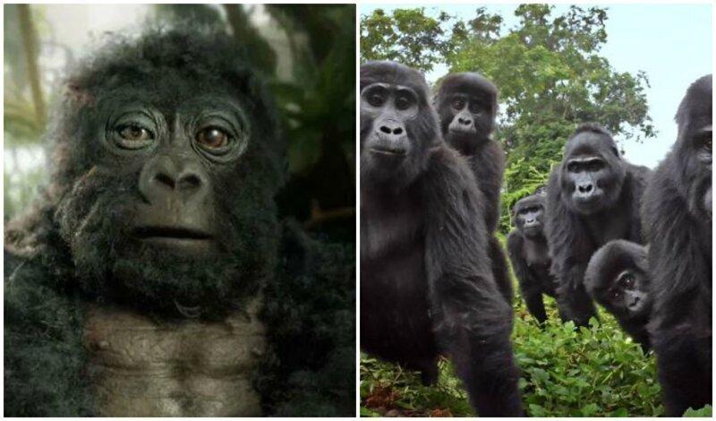 """""""Что за зверь?"""": в стаю горилл подселили невероятно реалистичного робота-шпиона"""