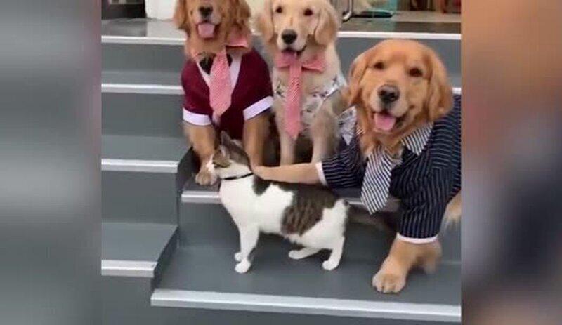 Собака заставила кота присоединиться к позированию для семейной фотографии