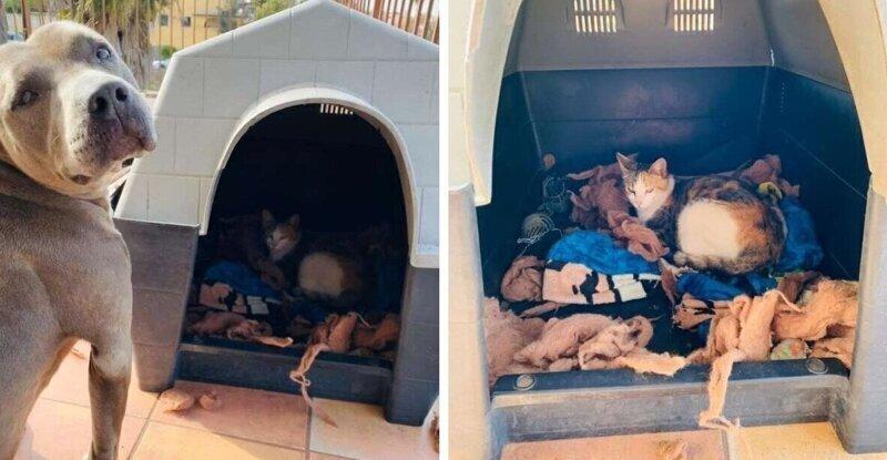 Собака привела домой беременную кошку и помогла ей родить