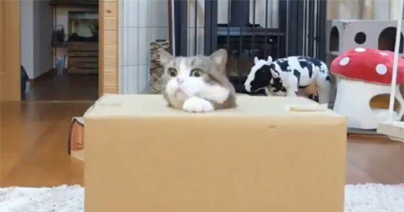 Кот, который слишком много ел
