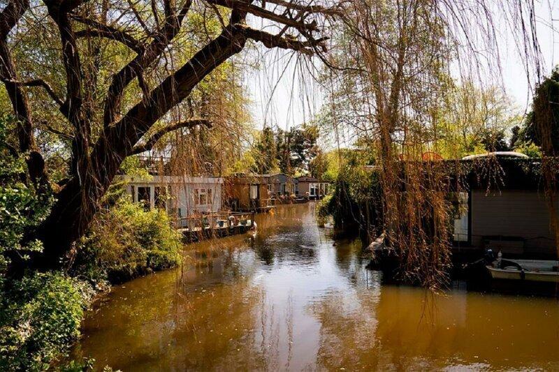Маленький остров в Лондоне - зона, свободная от коронавируса