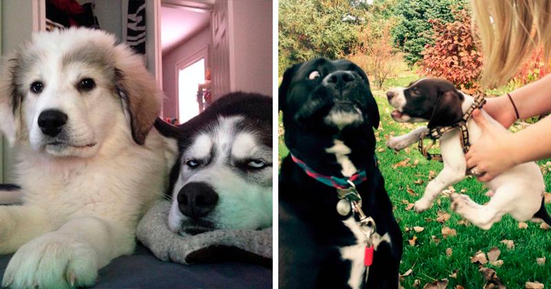 Собаки тоже не в восторге от младших братьев и сестер!