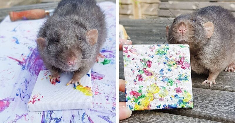 Семейство крыс стало модными художниками