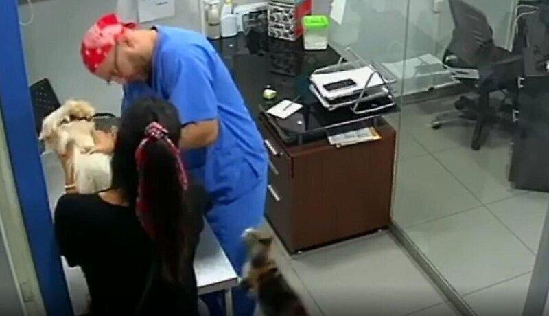 Кот заступился за собаку и напал на ветеринара