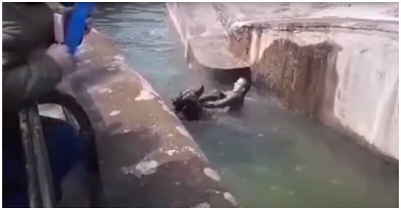 В Варшаве пьяный турист попытался утопить медведицу