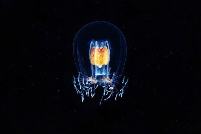 Невероятные фотографии «морских ангелов» и других существ, плавающих на глубине