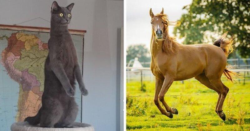 Лучшие смешные фотографии животных