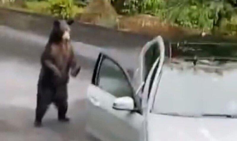 Американское семейство с помощью криков отогнало медведя от автомобиля