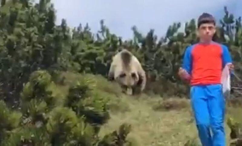 Школьник спасся от медведя благодаря своей храбрости и знаниям