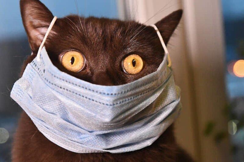 Впервые в России COVID-19 нашли у кошки