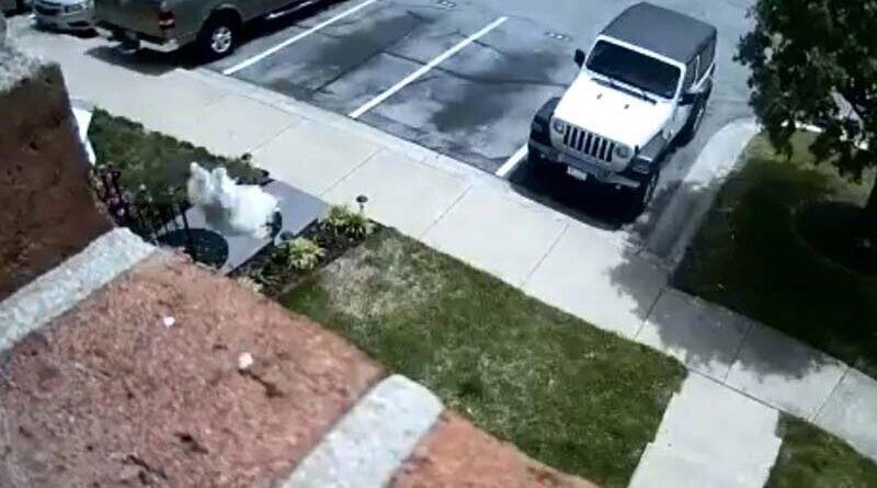Собака так хотела на улицу, что спрыгнула с 6-метровой высоты
