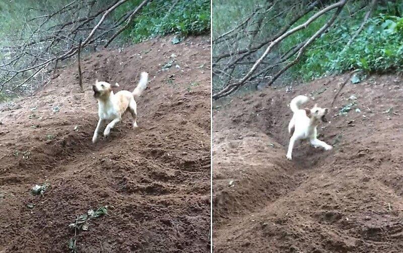 Самостоятельный пес развлекает сам себя
