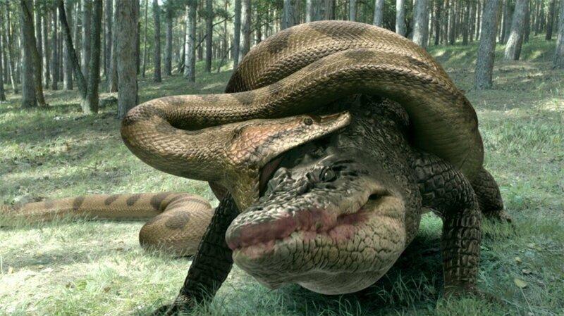 Как змеи едят животных, что в 3-4 раза шире их челюсти?