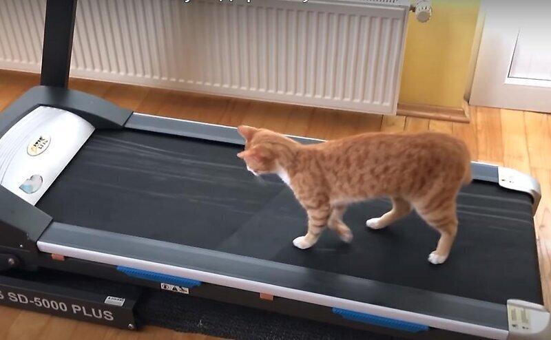 Забавная реакция кота на беговую дорожку хозяина