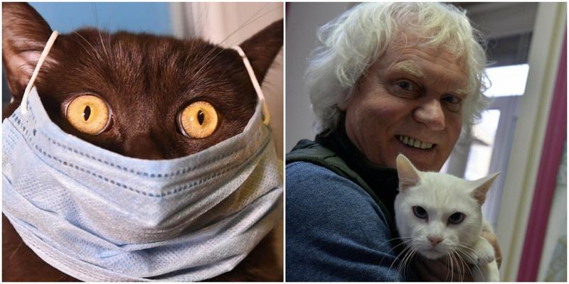 Юрий Куклачёв рассказал, какую опасность несёт коронавирус кошкам