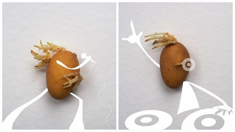 Иллюстратор на карантине подружился с проросшей картошкой