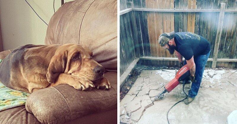 Хозяйка взяла из приюта пса и подарила ему радость, которую он заслуживал