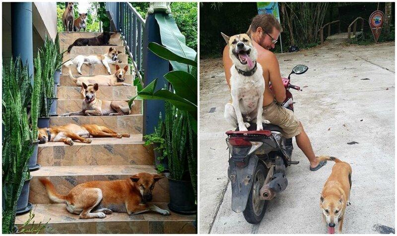 Пара из Литвы переехала в Таиланд, и приютила 15 бездомных собак