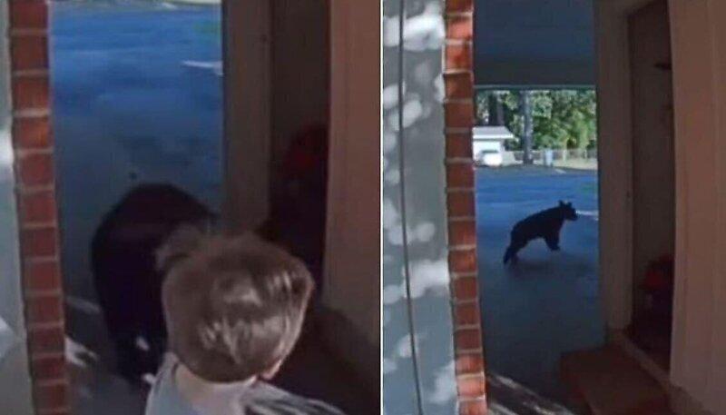Мальчик и медвежонок испугались друг друга, встретившись на улице
