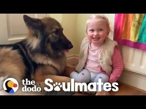 Милота-видео. Немецкая овчарка играет и ухаживает за маленькой девочкой