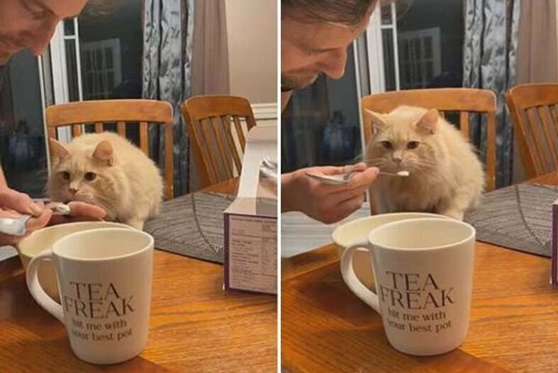 Реакция кошки, впервые попробовавшей мороженое