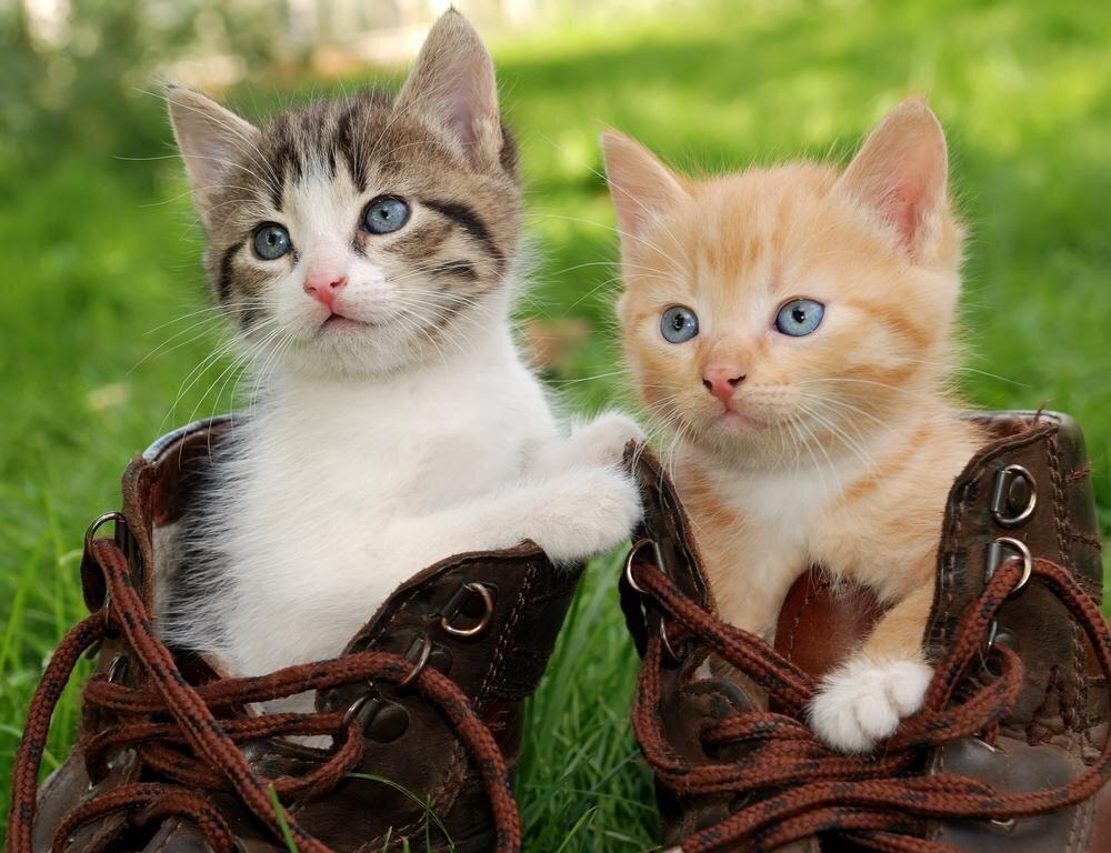 Почему кошка гадит не в лоток, а в обувь?