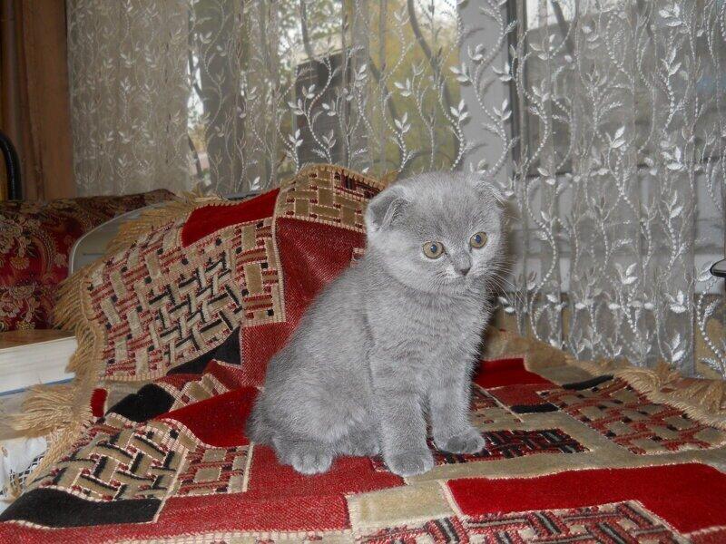 Помогите придумать имя котёнку