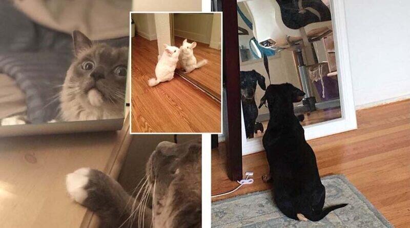 30 домашних животных, которые увидели себя в зеркале