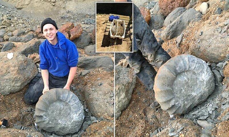 Британские студенты нашли на берегу древнего гиганта