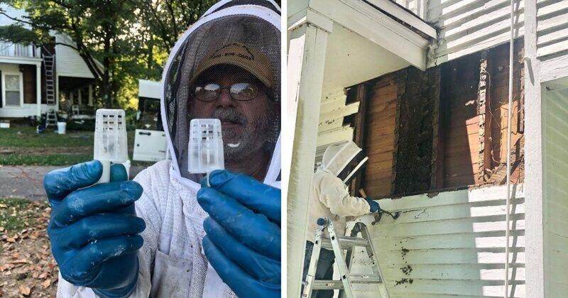 Мужчина нашел пчелиный улей высотой в два этажа