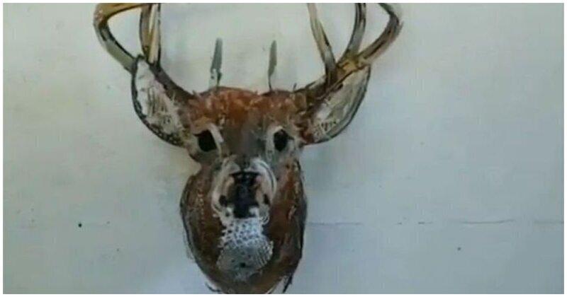 Необычная голова оленя на стене, которую стоит рассмотреть
