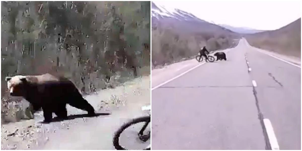 Турист на Камчатке отбился от медведя велосипедом