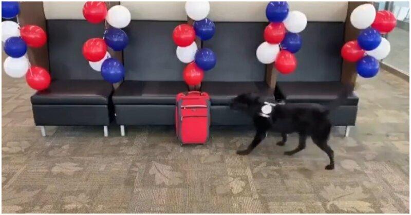 Полицейские устроили сюрприз собаке-саперу перед выходом на пенсию
