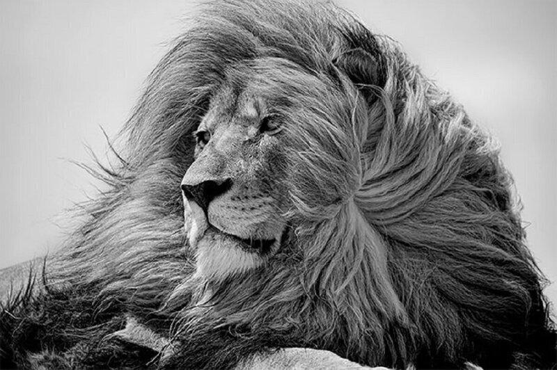Названы победители конкурса черно-белой фотографии