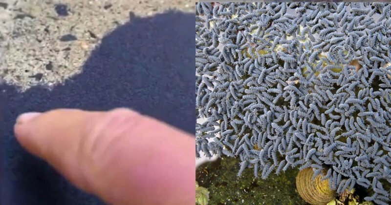 """Австралийка нашла во дворе необычный подвижный """"песок"""", который оказался насекомыми"""