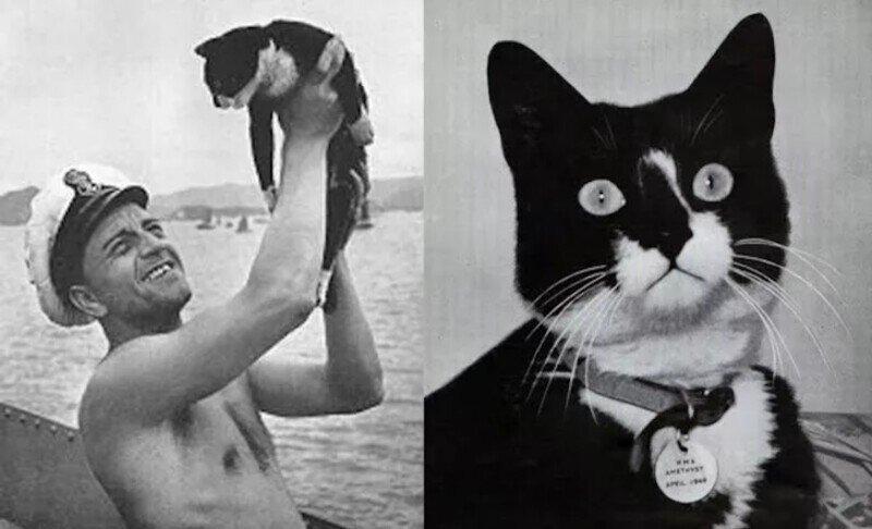 Знаменитости среди кошачьих: Непотопляемый Сэм